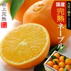 越冬完熟ネーブルオレンジ(5kg)香川産 国産オレンジ 送料無料