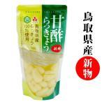 鳥取県産 甘酢らっきょう 220g  国産 新物 らっきょう漬け ラッキョウ 甘酢漬け