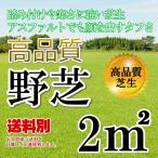 芝生 野芝 1平米 鹿児島産