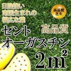 芝生 セントオーガスチン 1平米 日陰や寒さに強い芝生
