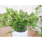 エミリオ ロバ  グリーン/観葉植物 アレンジメント