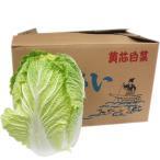 【箱売り】 白菜(はくさい・ハクサイ) 1箱(6本入り) 長野・大分・熊本・国産 【業務用・大量販売】