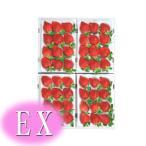 【いちご】 九州産 あまおう EX(エクセレント) 4箱(1箱9〜12粒入り) 福岡産(博多あまおうイチゴ) 九州の安心・安全な果物!