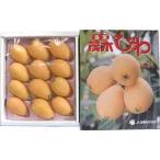九州産 温室 枇杷(びわ・ビワ) 化粧箱1箱Lサイズ12玉入り 九州の安心・安全な果物! 【九州・長崎産】 【RCP】
