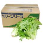 【箱売り】 グリーンリーフ 1箱(12〜18束) 長野・福岡産 【業務用・大量販売】【RCP】
