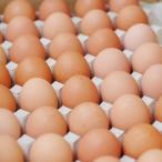 【箱売り】 輝黄卵 (玉子・たまご・卵・タマゴ) 1箱 福岡産・九州産(10kg、Mサイズ、約150〜160玉)九州 たまご 【業務用・大量販売】