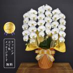 胡蝶蘭キングハイグレード3本立ち【御祝い、開店祝い、開院祝い、叙勲祝いなどに白の正統派胡蝶蘭】