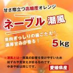 【キズ少お得】ネーブル 潮風5kg(愛媛県大三島産)