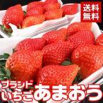 送料無料 フルーツ いちご  ブランドいちご「あまおう」デラックス(300g×2パック) イチゴ ギフト(gn)