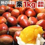 送料無料 フルーツ くり 栗 約1kg クリ 秋の味覚(gc)