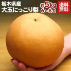 梨 送料無料 栃木県産 にっこり梨 約5kg  6〜8玉 ナシ なし(gn)