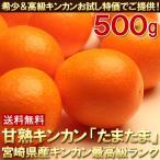 送料無料 キンカン たまたま 約500g きんかん 金柑(gn)