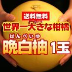 送料無料 みかん 本場熊本県産 晩白柚(ばんぺいゆ) 1玉(gn)