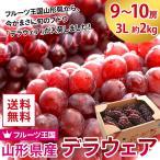 送料無料 ぶどう 山形県産 デラウェア 9〜10房 3L 約2kg 種なし 葡萄 ギフト(gc)