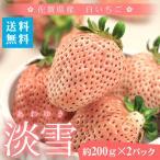 送料無料 熊本県産 大粒 白いちご 淡雪(あわゆき) 約500g 苺 イチゴ 贈答用 ギフト