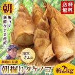 送料無料 和歌山県産 訳あり 滝本さんの朝堀りタケノコ約2kg (ぬか付き)   たけのこ 筍 竹の子