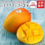送料無料 フルーツ マンゴー メキシコ産 グラシアスマンゴー キーツ種 シトラスマンゴー 2玉 芒果 冷蔵