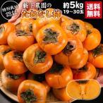 送料無料  訳あり 和歌山県 藪下農園の訳ありたねなし柿 約5kg  特別栽培 カキ 種なし フルーツ 果物 旬  ワケ キズ
