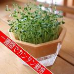 栽培キット ブロッコリー スプラウト栽培専用プラ容器 1セット