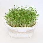グリーンフィールドプロジェクト 有機 ブロッコリースプラウト栽培キット ホワイト 2袋入