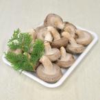 しいたけ 肉厚 生椎茸 600g 滋賀県 米原産 シイタケ 菌床栽培 高品質 濃厚な香り クオリティー