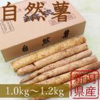 平成30年産 おおしま育ち 深山自然薯 カット自然薯(1.0kg〜1.2kg)