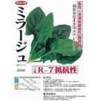 【ホウレンソウ】ミラージュ〔サカタ交配〕/小袋PRIMAX種子
