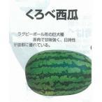 【スイカ】黒部すいか(くろべ西瓜)〔固定種〕/小袋