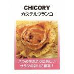 【世界の珍しい野菜】チコリー カステルフランコ/小袋