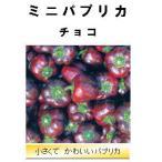 【世界の果菜】ミニパプリカ チョコ/小袋