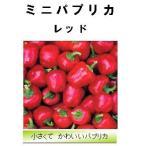 【世界の果菜】ミニパプリカ レッド/小袋