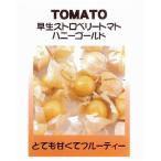 【世界の果菜】早生ストロベリートマト ハニーゴールド(食用ホオズキトマト) / 小袋
