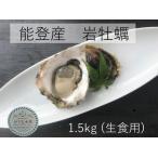 岩牡蠣 能登産    1.5kg    (6〜8個)(牡蠣ナイフ、片手用軍手付)送料無料