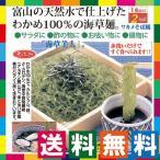 そば風海藻麺 海草美人14食セット 低カロリー ワカメ100%の海藻麺 低糖質麺 ダイエット ロカボ
