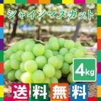 産地直送 シャインマスカット 4kg フルーツ 山梨県産 ぶどう ブドウ 葡萄 産直 お取り寄せ 果物 贈答用 ギフト