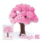 マジック桜 Magic桜 12時間で咲く感動のサクラ 入学 卒業 合格 母の日 海外の方への贈り物におすすめ