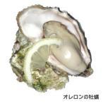 オレロン島の活牡蠣 白い真珠96ケ【完全ご予約品】