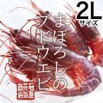 【条件付き送料無料】ブドウエビ 2Lサイズ(約400g/11