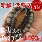 活エゾアワビ(60〜70g×5個)冷蔵 ◯