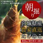 【条件付き送料無料】高橋さんの朝掘りたけのこ(約3kg/3〜4本)冷蔵
