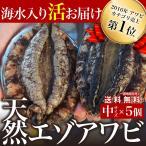 【送料無料】宮城県石巻産 金華山の天然活エゾアワビ(5個)冷蔵