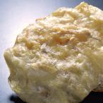 otumamihonpo_td9806