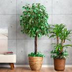 観葉植物 光触媒みずみずしい葉でボリュームたっぷり! 売れ筋