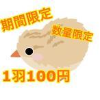 冷凍 ウズラ 5羽入り(未処理) ふくろうの餌 ふくろう 鷹 隼 猛禽類