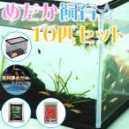 メダカ (めだか飼育 10匹セット) めだか10匹+ガラス水槽S+えさ+ソイル