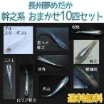 ショッピングお試しセット (送料無料) メダカ 長州夢めだか 幹之系 5種類10匹 お試しセット 成魚