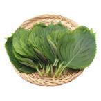 雅虎商城 - 『韓国産野菜』エゴマの葉|えごまの葉(1束20枚入)[生野菜]