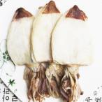『海産類』一夜干し剣先するめ(ケンサキするめ)|ハンチ(5枚)■ベトナム産 干し物 干し食材