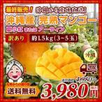 訳あり 超希少 沖縄県産 マンゴー 夏小紅 約2.0kg(4〜7玉)  糖度が高く種が小さいので食べ応え◎ お取り寄せ 送料無料 美味 マンゴー わけあり 得トクセール