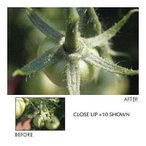 カメラ 写真 レンズ フィルター 補助/コンバージョンレンズ Vivitar 62mm Close Up + 10 Filter #VIV-CL10-62